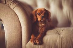 adorable-1866530_1280