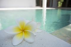 flower-1460889_1280