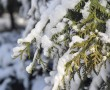 winter-1815530_1280