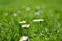 bloom-1842656_1280