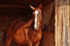 horse-2147884_1920