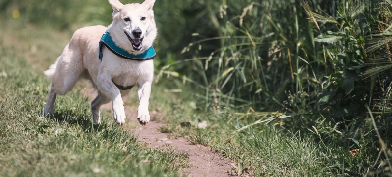 Pet Friendly Lodges in Lincolnshire