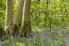 Lincolnshire Wildlife Trust